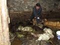 Karlıovada Sel Felaketi