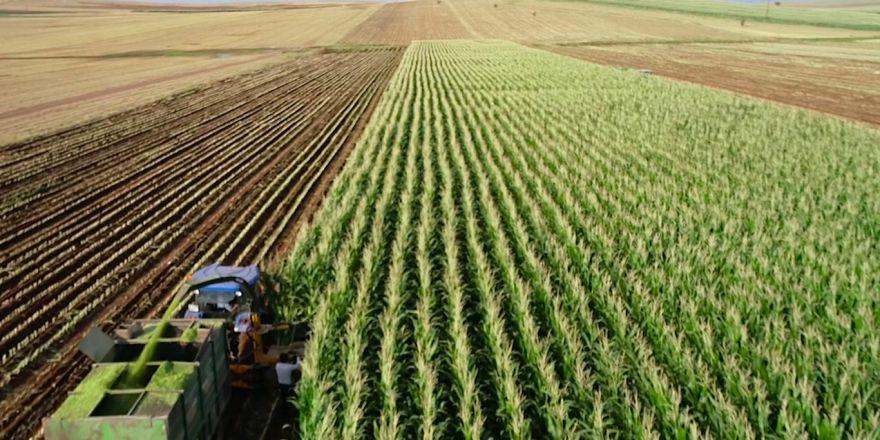 """""""Hayvan turşusu"""" yapan Çınarlı çiftçiler: Destek istiyoruz"""