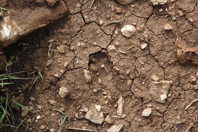 Çınar Karabudak'da leopar ilk kez görüntülendi 1