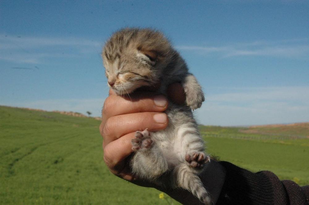Leopar yavruları yeniden görüldü 1