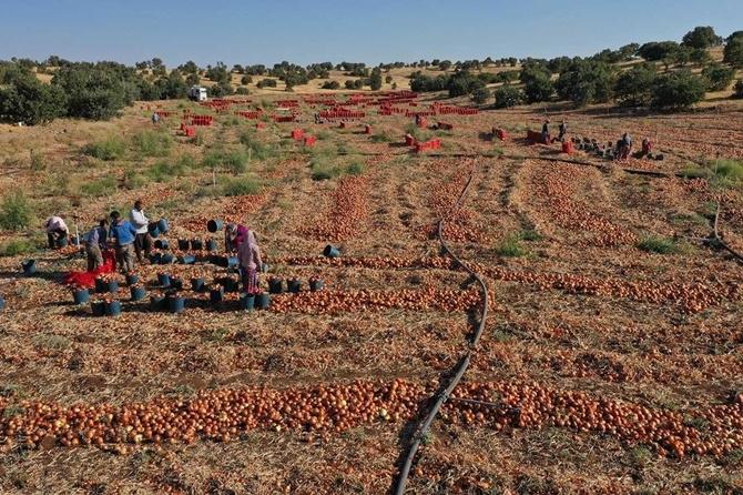 Çınarlı çiftçiler soğan fiyatlarından memnun değil 1