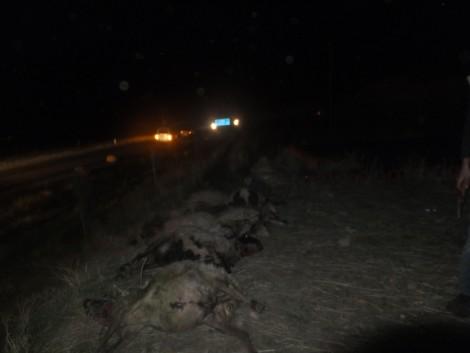 Çınar'da Otomobil, Koyun Sürüsüne Daldı 1