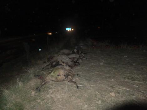 Çınar'da Otomobil, Koyun Sürüsüne Daldı 2