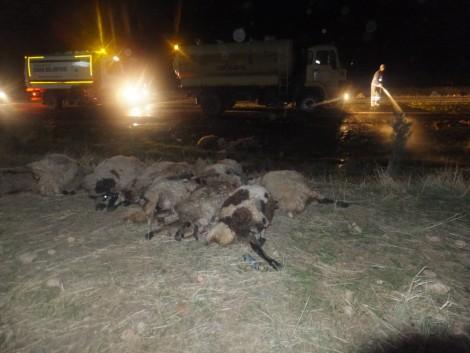 Çınar'da Otomobil, Koyun Sürüsüne Daldı 3