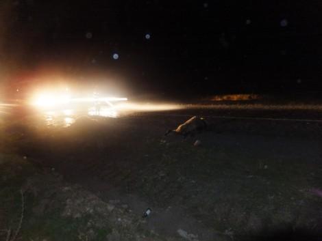 Çınar'da Otomobil, Koyun Sürüsüne Daldı 4