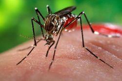İnsanlarda görülen hastalıkların yüzde 61'i hayvan kökenli