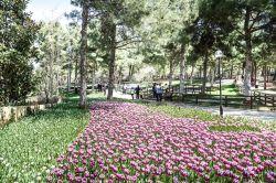 Gaziantep Dülük Tabiat Parkında lale devri