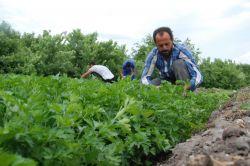 UNESCO'ya alınan Hevsel Bahçelerinin ürünleri alıcı bulamıyor video foto