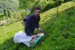 En iyi çay Mayıs ayındaki çaydır video foto