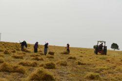 Bölgede yaşanan kuraklık çiftçiyi mağdur etti