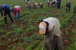 Biçerdöver ve tarım işçi ücretleri belirlendi