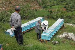 Çiftçilere arılı kovan dağıtıldı