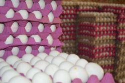 Artan arz ve sıcaklıklar yumurta fiyatlarını etkiliyor