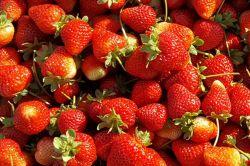 Bingöl'ün yerli organik çileği çıktı