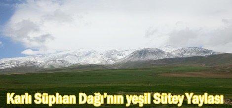 Karlı Süphan Dağı'nın yeşil Sütey Yaylası