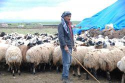Kobanili aile çobanlık yaparak geçiniyor