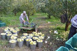 Ceviz büyüklüğünde yağan dolu meyve bahçelerini vurdu