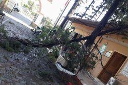 Şiddetli fırtına ağaçları devirdi