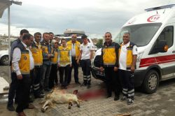 112 sağlık çalışanları atlattıkları kazalar için kurban kestiler