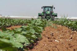 Çiftçilere alternatif gübre kullanımı tavsiyesi