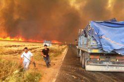 Kızıltepe'deki anız yangınları köyleri sardı foto