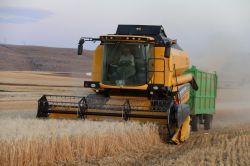 Çiftçiler mahsulden memnun