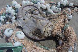 Ağlara takılarak ölen deniz canlıları kıyıya vurdu