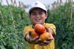 Çamlıyaylalı çiftçiler ilk kez domates hasadı yaptı video foto
