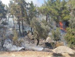 Mersin Silifke'de çıkan orman yangınında 10 dönümlük alan yandı foto