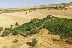 Licelilerden esrar tarlalarına ilişkin önemli iddia