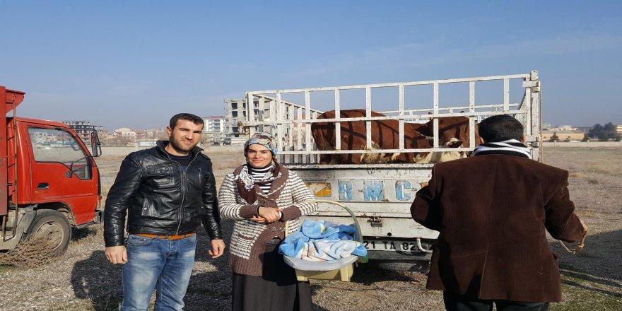 Bismil'de 15 genç çiftçiye hibe hayvan dağıtımı yapıldı