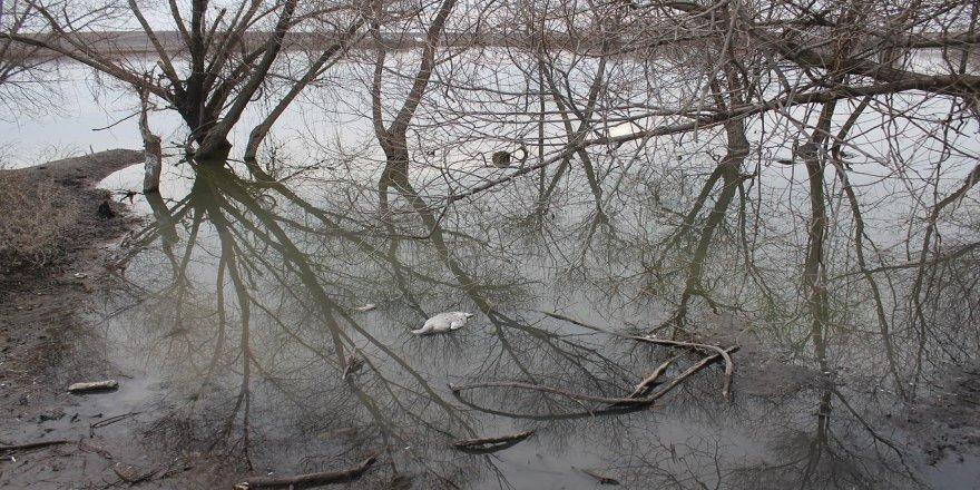 Bismil'de gölete giren yüz kaz telef oldu