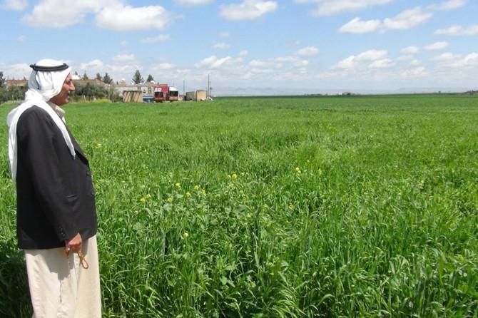 Nisan yağmuruyla yüzleri gülen çiftçiler yüksek rekolte bekliyor