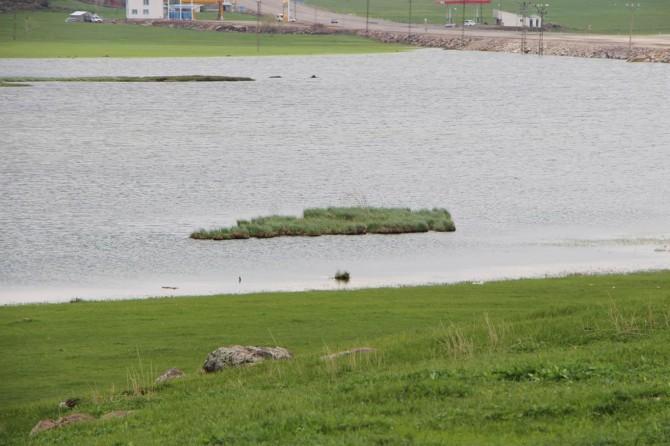 Karlıova'da yüzen adalar oluştu
