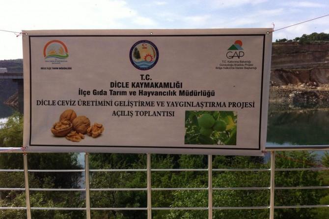 Dicleli çiftçilere ceviz fidanı dağıtıldı