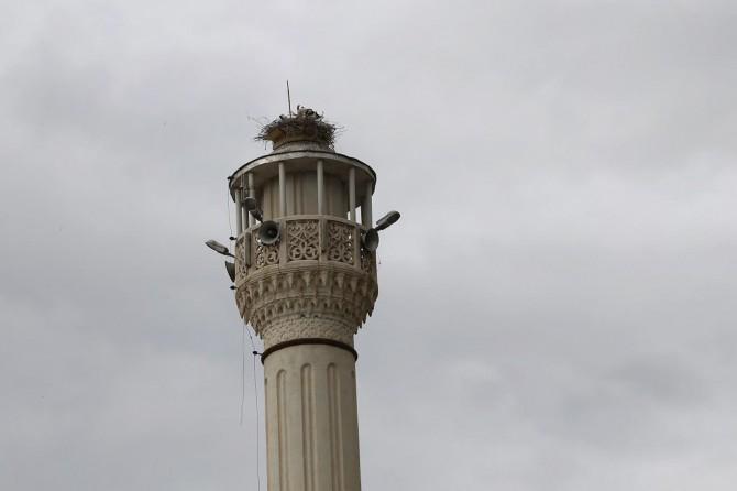Tıraşlanan minare leyleklerin yuvası oldu