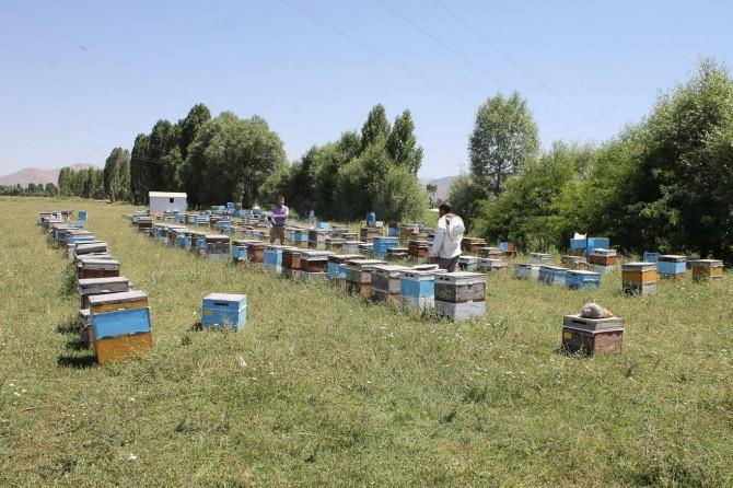 Muşlu arıcılar yaklaşık 600 ton bal bekliyor