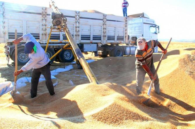 TMO Bingöl'de buğday alımına başladı