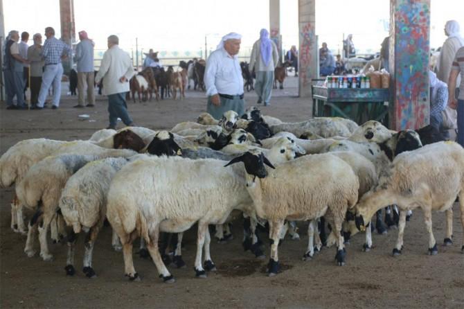 Türkiye'de hayvancılık sektörü dengesiz işliyor