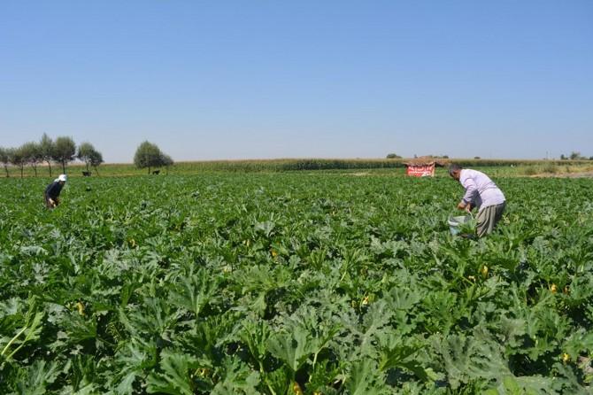 Çiftçiler: Emeğimizin karşılığını başkaları alıyor