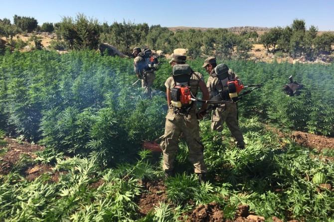 Diyarbakır Hazro'da esrar operasyonu video