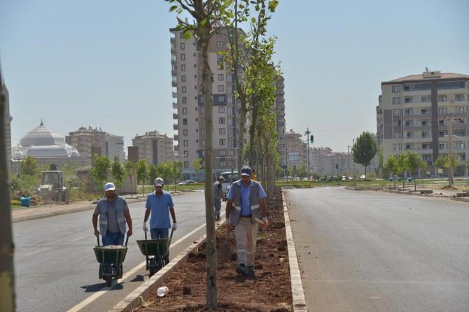 Diyarbakır'da kaldırım ve refüjler yeşillendiriliyor
