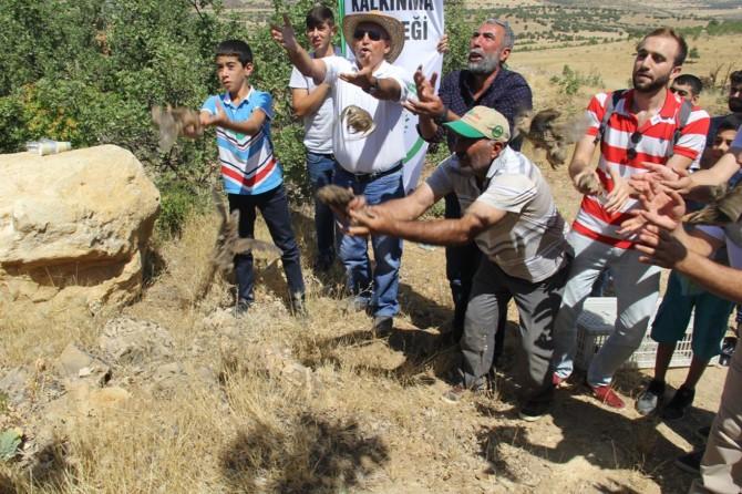 Diyarbakır Lice'de bıldırcınlar doğaya salındı