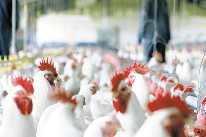 Beyaz et sektöründeki 19 şirkete soruşturma açıldı