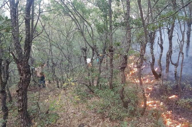 Tunceli Valiliğinden orman yangınlarına ilişkin açıklama