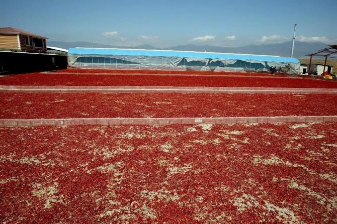 """""""Gaziantep biber üretiminde söz sahibi olacak"""""""