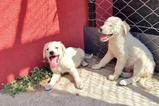 Yavru köpekler koruma altına alındı