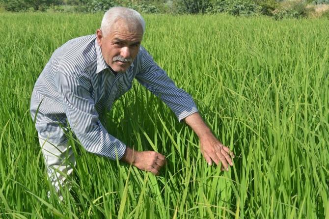 Köylerinin pirinç bölgesi ilan edilmesini istiyorlar
