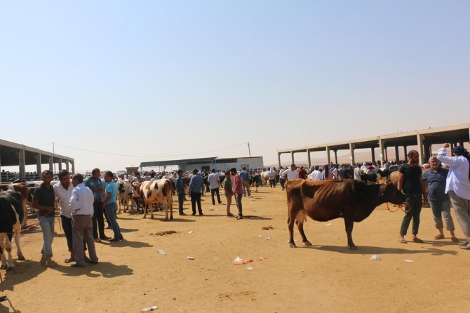 Şanlıurfa'daki hayvan pazarlarında hareketlilik