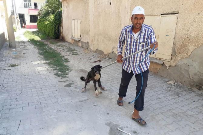 Hilvan'da başıboş köpeklerin bir kısmı toplatıldı